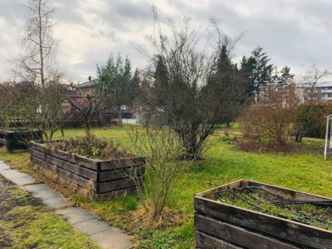 Baugrundstück für ein Mehrfamilienhaus oder zwei Stadtvillen in Toplage von Teltow, 14513 Teltow, Grundstück